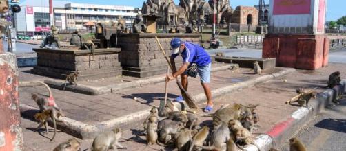 Macacos saem do controle na cidade de Lopburi, na Tailândia. (Arquivo Blasting News)