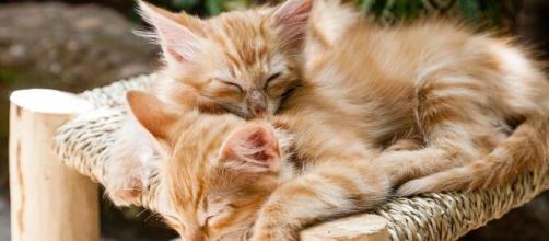 chat : s'il dort sur vous ce n'est pas uniquement parce qu'il vous aime - photo Pixabay