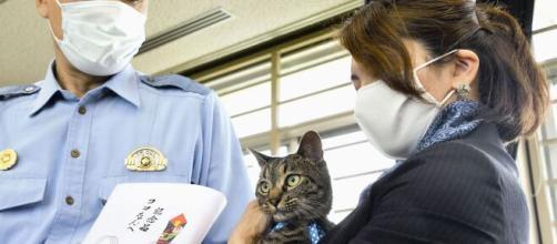 Koko accompagnée de sa propriétaire pour recevoir les honneurs de la police japonaise (source : capture Twitter @kyodo)