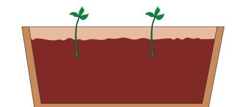Il taleaggio, una modalità per 'riprodurre' una pianta in poche settimane.
