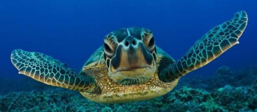 Tortuga … (con imágenes)   Tortugas marinas, Animales bajo el agua ... - pinterest.ie