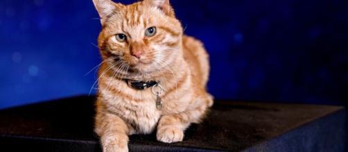 Só quem ama sabe o amor de um gato. (Arquivo Blasting News).