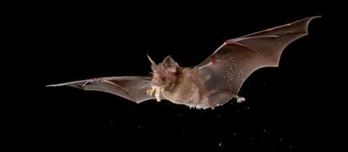 Cientifícos estudian a los murciélagos en China