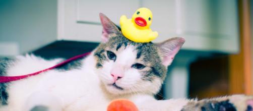 chat s'il vous suit dans la salle de bain ce n'est pas seulement pour prendre un bain - photo Pixabay