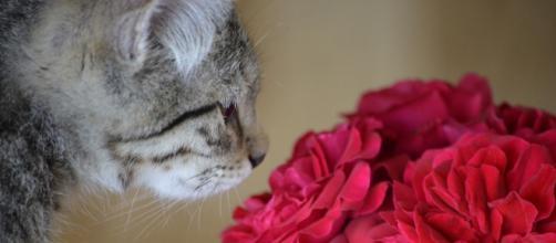 chat : il ne suffit pas de le laisser dormir avec lui pour lui montrez que vous l'aimez - Photo Pixabay