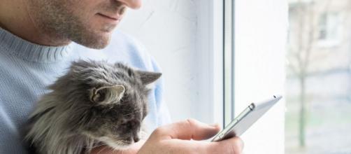 illicoVeto, la plateforme de conseils de vétérinaires. Credit: Shutterstock