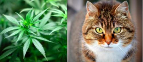 Un simple histoire de chat permet à la police de trouver du cannabis - Photos Pixabay