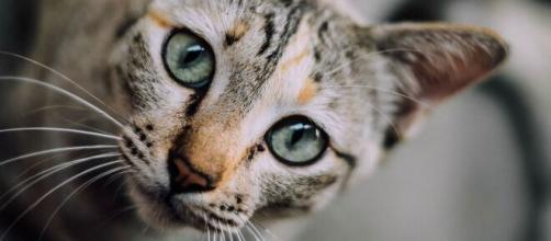 chat pourquoi il ne fait pas pipi dans sa litière ? - Photo Pixabay