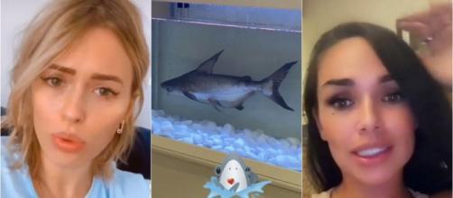 Un requin dans un aquarium dans la villa de la JLC Family, Jazz réagit et Virginie clashe la famille de Dubaï.
