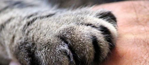 chat sa patte est son tendon d'Achile - Photo Pixabay