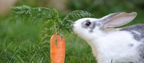 Los conejos son ideales como mascotas para los niños
