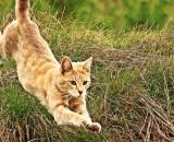 chat quart d'heure de folie - Photo Pixabay