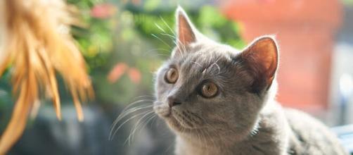 chat pourquoi il me marche dessus - Photo Pixabay