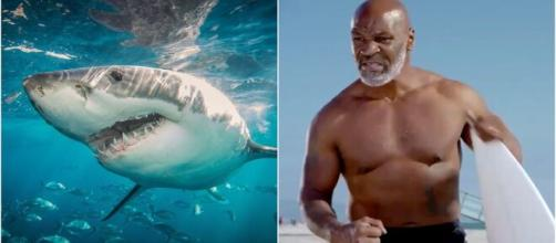For some reason, Mike Tyson is going head-to-head with 'Jaws' in a ... - com.au
