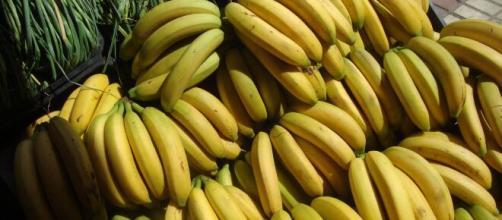El plátano es una planta herbácea, no un árbol