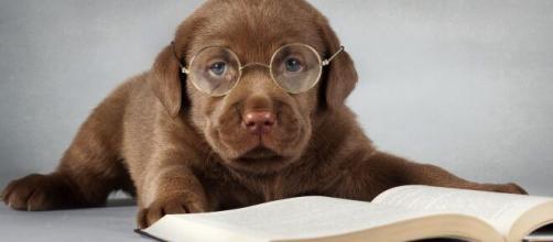 5 libros para leer durante el Día Mundial del Perro