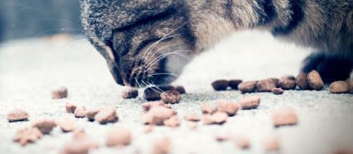 chat s'il met sa nourriture par terre avant de manger ce n'est pas seulement par confort - Photo pixabay