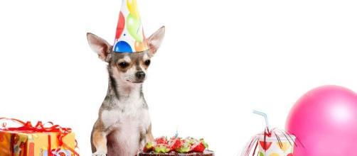 Hoy celebramos el Día Mundial del Perro | POSTA - com.mx