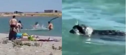 Una cría de foca es maltratada por un grupo de turistas.