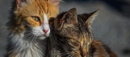 un projet de loi pour lutter contre les abandons d'animaux est en préparation - Photo Pixabay
