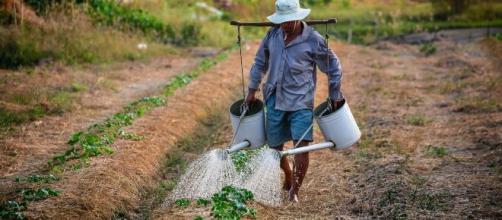 Câmara aprova auxílio emergencial para agricultor familiar. (Arquivo Blasting News)