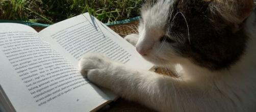 chat s'il vient vous déranger ce n'est pas seulement par amour - photo pixabay
