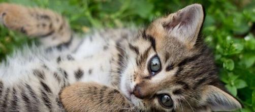 Adopter un chat pourrait vous coûter bonbon - Photo Pixabay