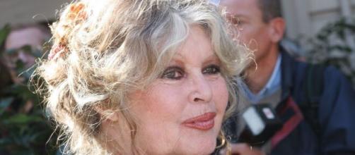 Brigitte Bardot s'est attaquée à la fête religieuse de l'Aïd-el Kébir sur son compte Twitter - capture Twitter