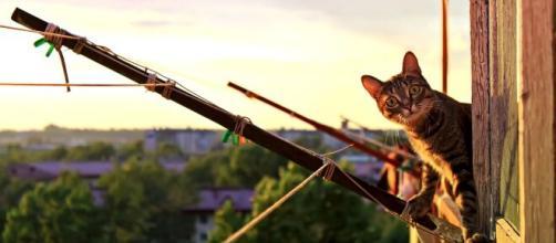 chat comment le protéger du soleil - Photo Pixabay