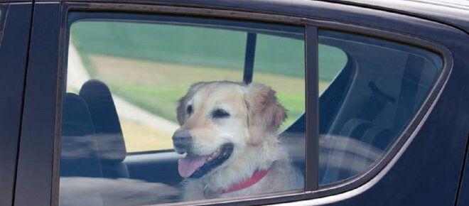 Pisa, lasciano cane in auto sotto il sole: trovato senza vita, denunciati i proprietari