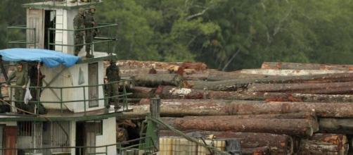 Pressão interna e externa faz crescer interesse na bioeconomia da Amazônia. (Arquivo Blasting News)