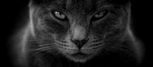 chat toutes ces choses qu'il déteste chez vous - Photo Pixabay