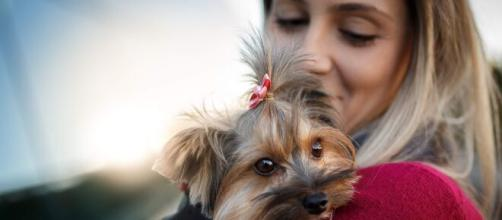 Os animais de estimação podem mudar a vida das pessoas para melhor. (Arquivo Blasting News)