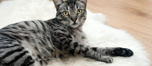 Comment faire pour que votre chat vous aime ? - Photo pixabay