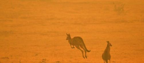 The impact of Australia bushfires on wildlife. [Image source/CBS This Morning YouTubee video]