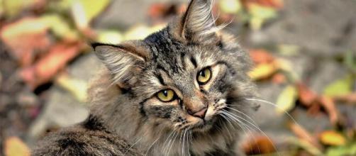 chat : S'il miaule après avoir fait ses besoins ce n'est pas seulement pour faire passer un message - Photo Pixabay