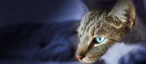 chat : s'il dort sur votre tête ce n'est pas pour vos cheveux - Photo Pixabay