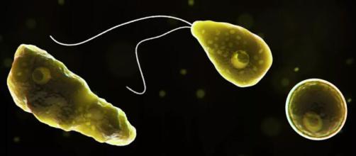 Os Estados Unidos estão sob alerta após caso de Ameba 'comedora de cérebro'. Foto: Arquivo Blasting News