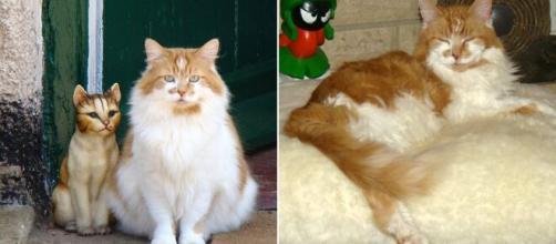 Ruuble le chat le plus vieux du monde est mort à l'âge de 31 ans (source : capture Twitter)