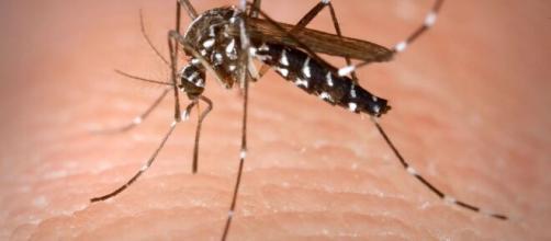 Virus del Nilo aparece en 13 Estados de EUA