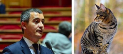 Chat : la décision de Gérald Darmanin ne passe pas pour les internautes - montage photo