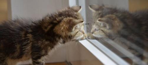 Chat s'il gratte la porte ou le miroir ce n'est pas seulement pour faire ses griffes - Photo Pixabay