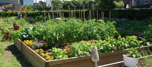 """Pour éviter aux jardiniers de se casser le dos, """"Réussir son potager du paresseux"""" (éditions Tana) recommande des potagers surélevés et paillages"""