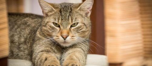 Pourquoi votre chat vomit ? - Nos conseils et astuces - Photo Pixabay