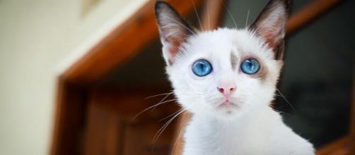 Votre chat peut-il être jaloux - Photo pixabay