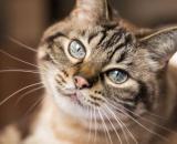 La chatte n'a plus revu ses propriétaires depuis 12 ans, image d'illustration - source : Pixabay)