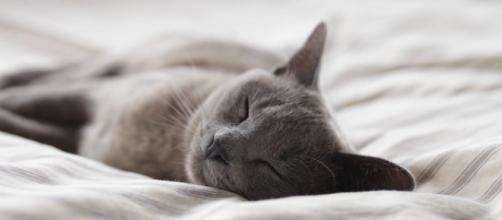 Dormir avec son chat a plusieurs avantages. Credit: fotomelia