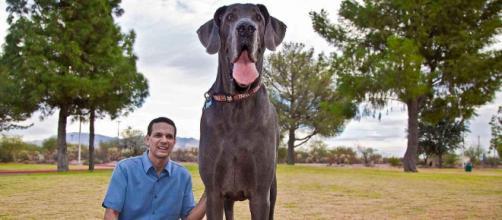 Maiores raças de cachorros do mundo. (Arquivo Blasting News)