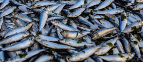 Trois tonnes de poissons morts retrouvés dans l'Aisne. Creidt: Oziel Gómez/ Pexels