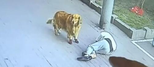 Idoso foi atingido por um gato enquanto passeava com seu cachorro. (Reprodução/Twitter)